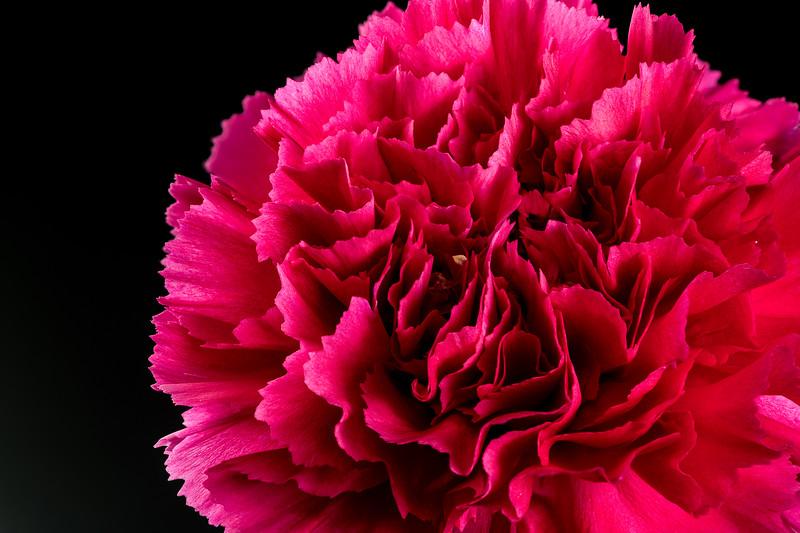red flower-02-12_
