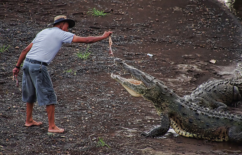 "02-25-2012 ""Dances with Crocs"""