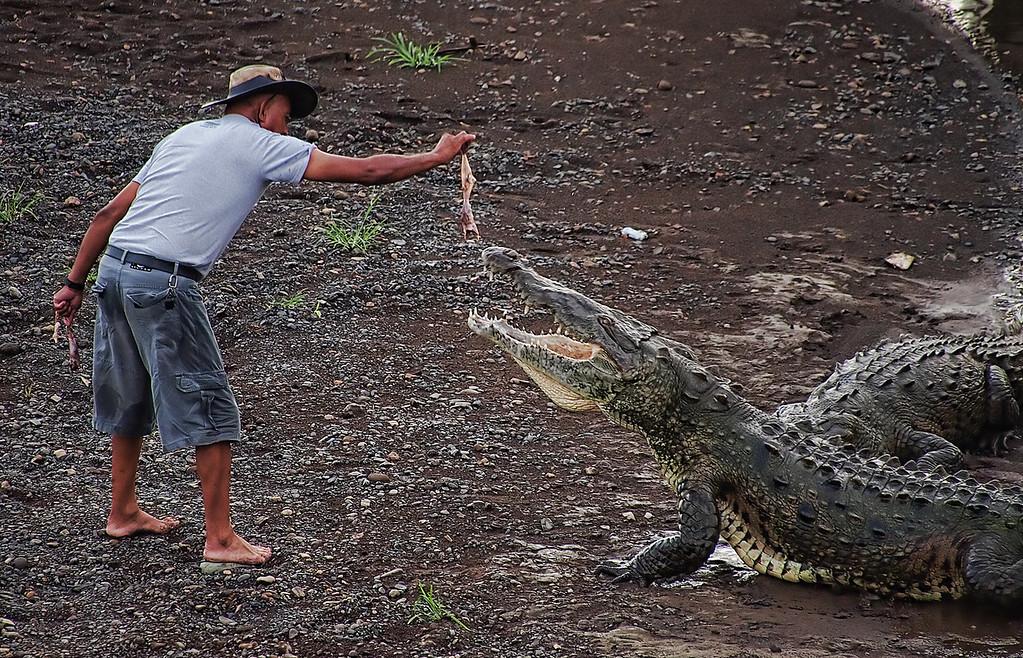 "02-25-2012 ""Dances with Crocs"""