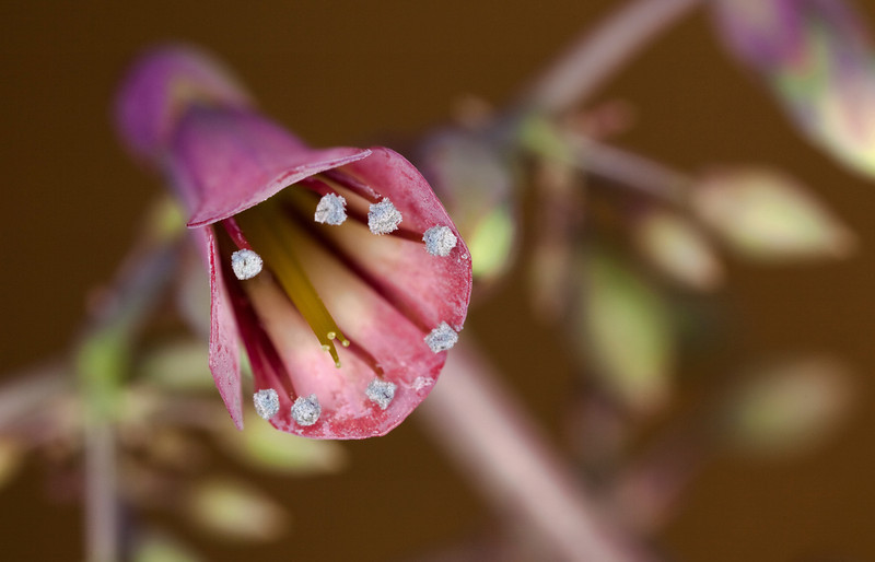 "02-22-2012 ""Night Blooms"""