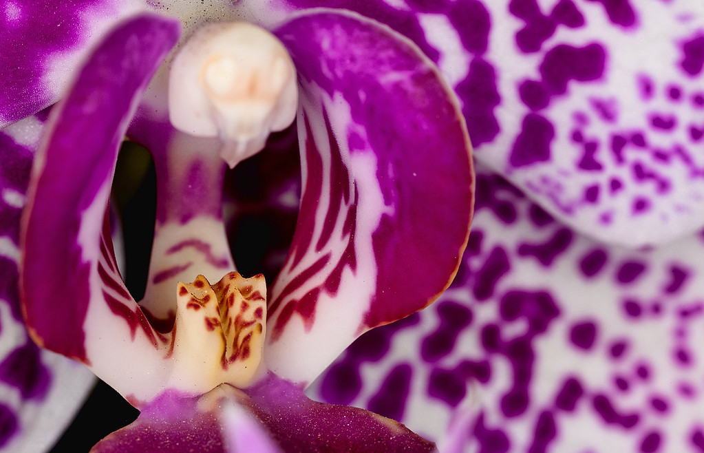 "02-10-2012 ""Orchid Mouth"""