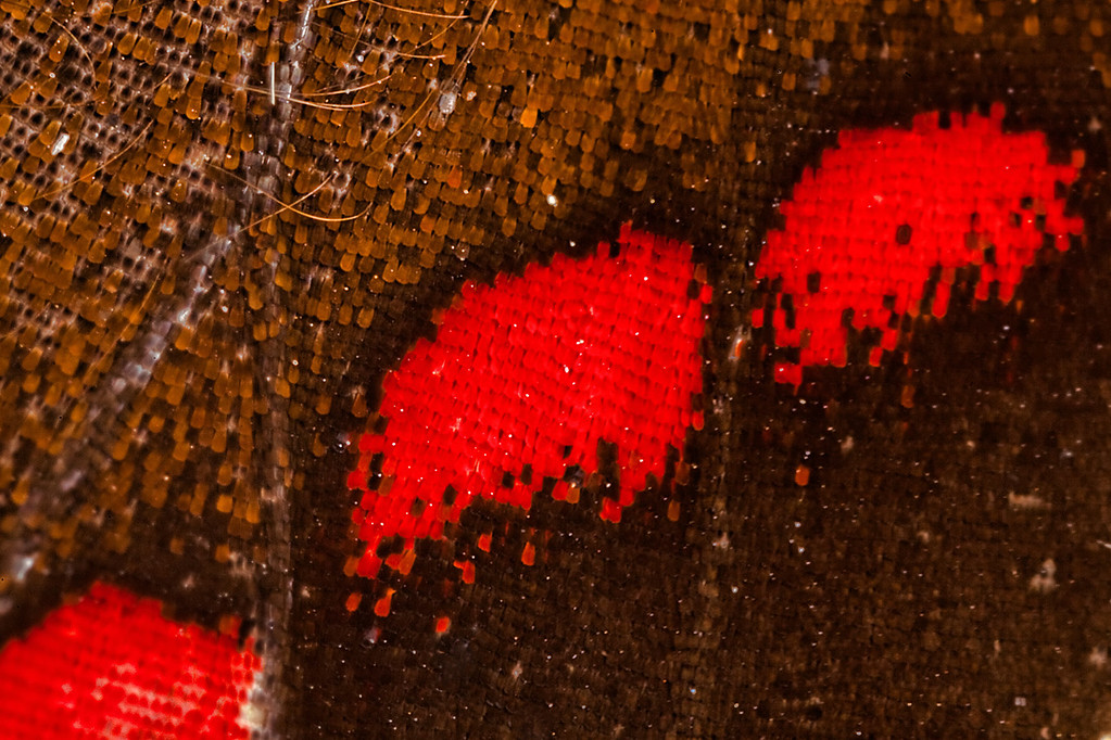 """01-27-2012 """"Nature's Pixel Art"""""""