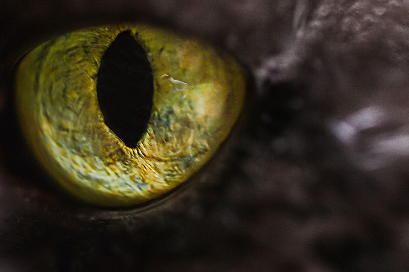 """06-23-2012 """"In too deep""""<br /> <br /> The eyes are the windows of the soul... that is an often heard phrase indeed.  This eye seems to go very deep, maybe too deep.  What goes on behind this eye?  Does it lead to a soul or do we have to accept that only humans are privileged with such a commodity?<br /> <br /> There is awareness here, not just some empty shell.  I believe there is a soul just like mine behind these eyes and because of that I also believe respect and care must be given as they would be to anyone.  Some might not like it, but I think we are pretty much equals in this aspect.<br /> <br /> Keep that in mind..."""