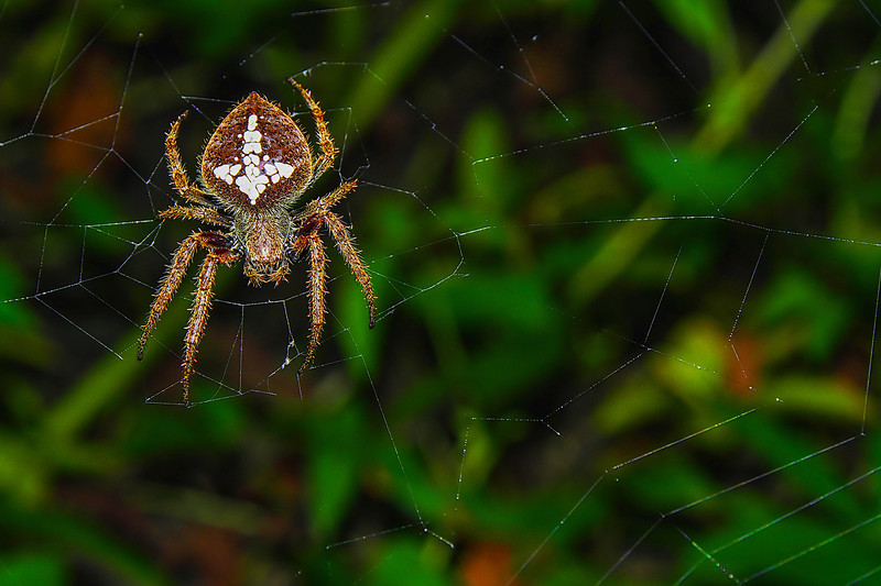 "08-21-2012 ""Architect""<br /> <br /> Nature may seem out to get rid of us sometimes, but you have to stop and see the marvels it creates: I like spiders, I find them fascinating.  I was not aware I had a new neighbor until today, when I took this picture.  This is a somewhat big spider so I think it probable moved here from somewhere else.<br /> <br /> Be as it may, I am happy to have it!  The way it worked its web is amazing, and it was done in less than a night, which is an architectural feat I find simply jaw-dropping.<br /> <br /> So yes, nature can be very mean, but also very amazing!"