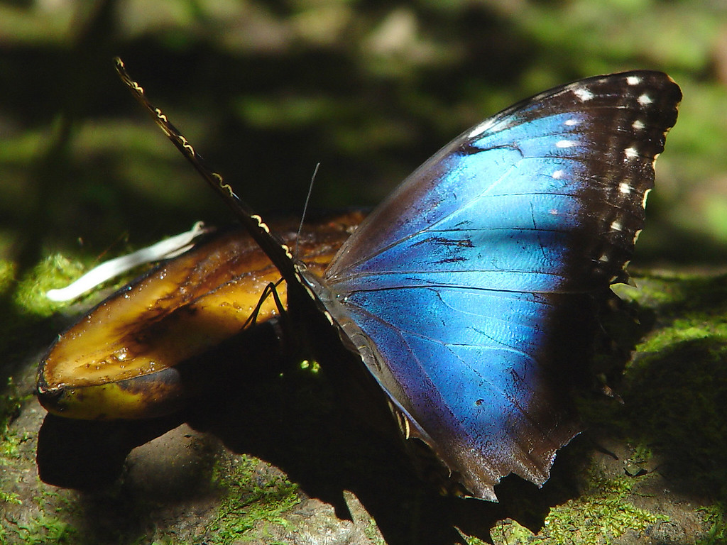 The Blue Wing