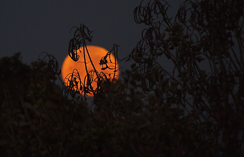 """03-08-2012: """"Red Moon, Hiding"""""""