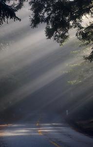 road & fog_6927
