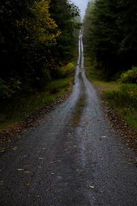 Forest Road Hoh Rainforest Olympic Peninsula WA_7412