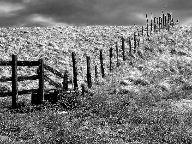 The Log Fence -B&W Version-