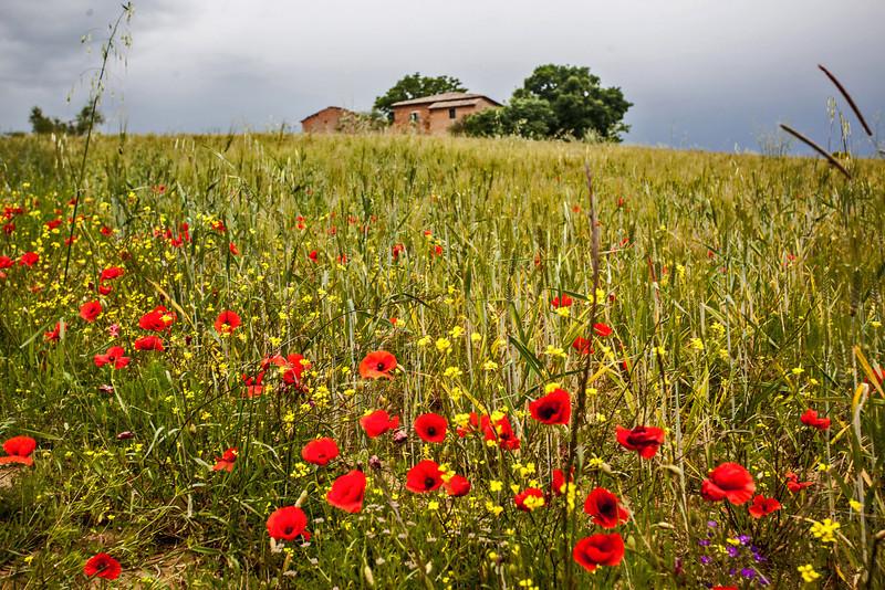 Montepulciano #Montepulciano #Toscana2013