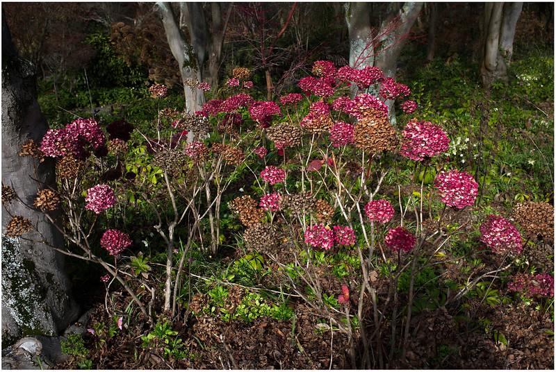Christchurch Botanical Gardens 2020