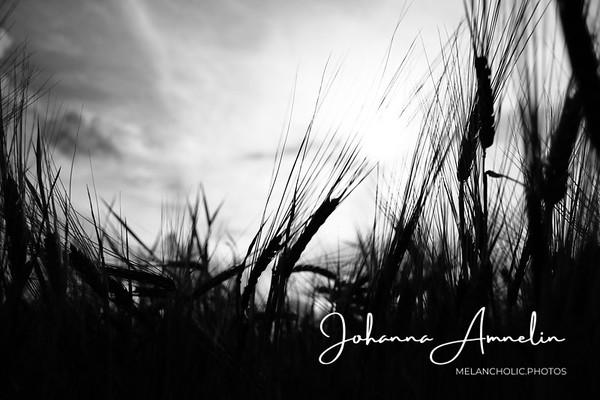 August in the countryside - Elokuu maalla 2012
