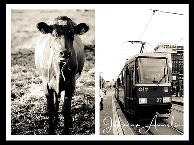 Countrylife vs. Citylife - Maalaiselämää vs. Kaupunkilaiselämää 2011