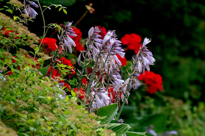 Flowers  digi-1160617