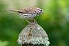 SOSP on feeder top-1100852