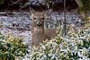 Deer in back yard-1120843