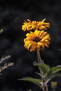 Flowers digi-1160552