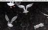 Gulls--2