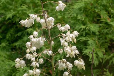 Flowers digi-1160377
