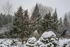 Snow in back yard-1120660