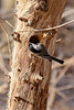 Tree bark with Chickadee-