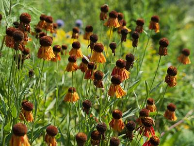 Tangled Garden _3910068.JPG