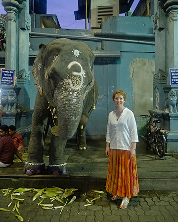 Jane and the temple elephant