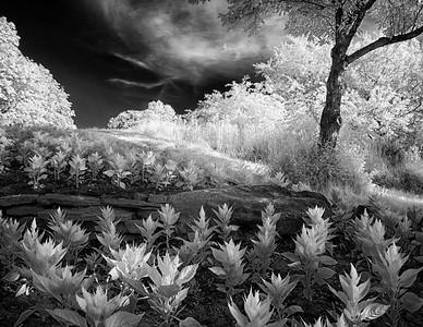 Eerie Garden Sam Lawrence Park Eerie Garden _1050986