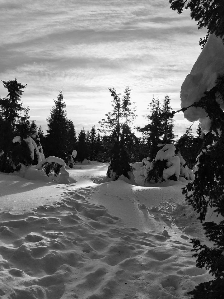 Skiing_Norway IMG_0830