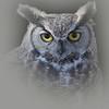 glaring gaze ....