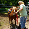 Ride a Gental Spanish Mustang Weds. 11am-2pm