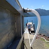 In order to not shock the fish, the temperature of the water in the transport tank needs to equalized with the temperature of Lake Cushman before the fish can be released. A tube slowly sucks in water from the lake into the transport tank; it takes about an hour to get the temperature equalized.