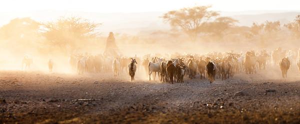 Goatherding on the Negev Desert, Egypt