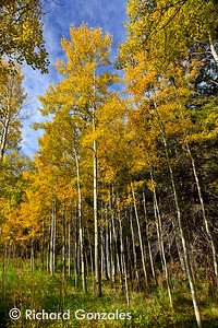 2015 Oct Fall Colors Sipapu Area