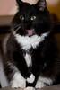 """Pet Portrait """"Charlie"""""""