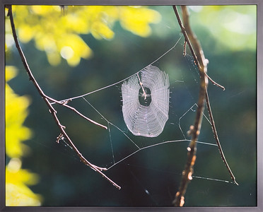Spider web Print with no glazing