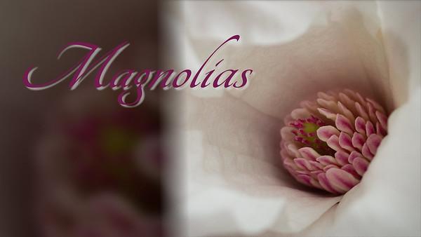 Magnolias 2017
