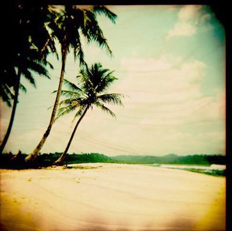 Holga Palm