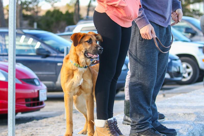 Dog Teak at Surfing at North Hampton State Park on Sunday 4-2-2017. Matt Parker Photos