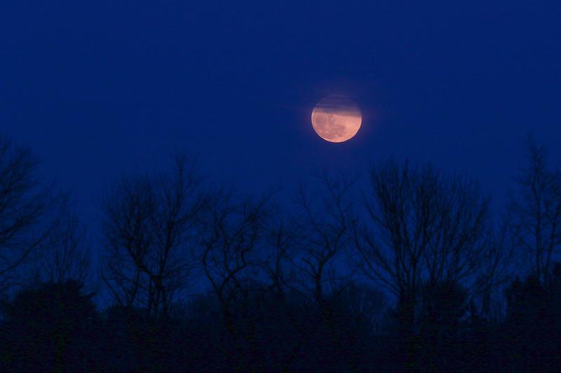 Moon over the trees on 3-2-2018, Hampton, NH.  Matt Parker Photos