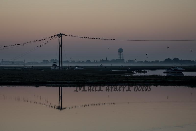 Birds sitting on powerlines in the Seabrook Hampton Estuary at sunrise from the trestle on Sunday 9-16-2018.  Matt Parker Photos