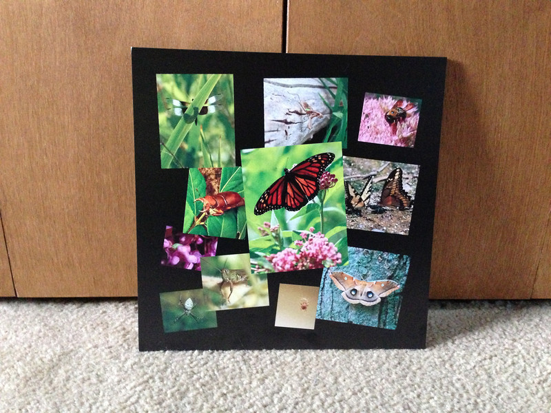 Bug box!  I made this collage for the kids of some of the bugs we have found :)