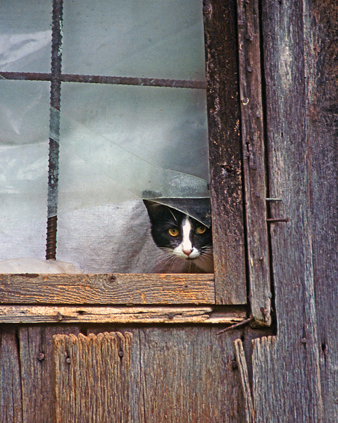 37 - Cat in Window, Casey County, Kentucky
