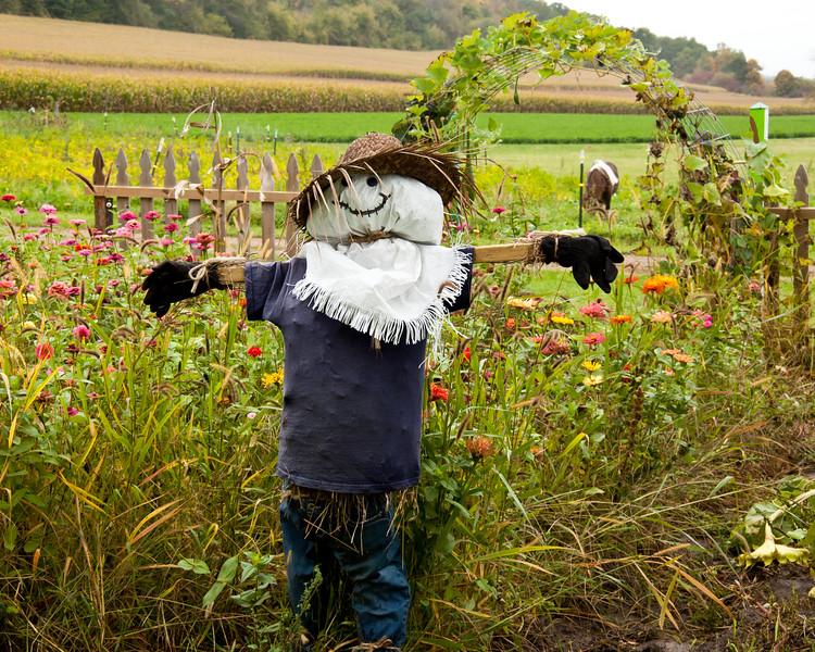 31 - Garden Scarecrow, Sauk County, Wisconsin