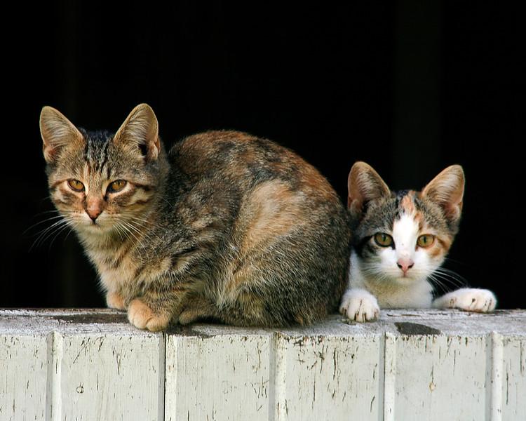 35 - Cat and Kitten on Dutch Barn Door, Franklin County, Iowa