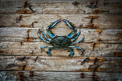 Fine Art Blue Crab Photograph