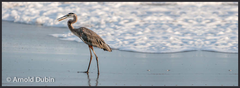 005-20130922-130922 S Melbourne Beach-Nikon D300S -_DSC0023-Edit-2