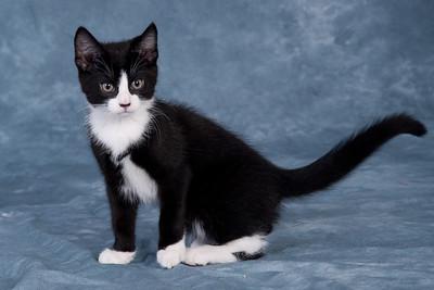 Kitten 4C