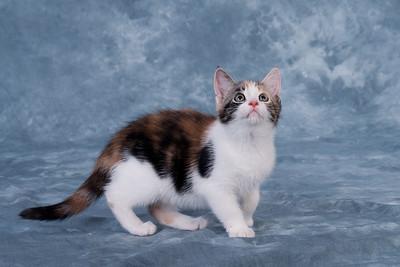 Kitten 5C