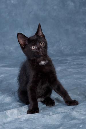 Kitten 2D